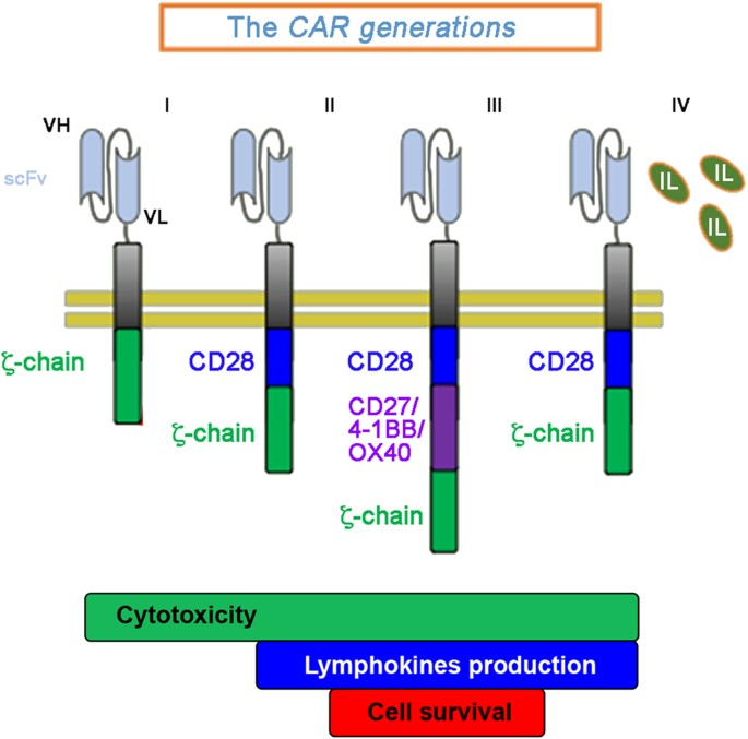 Car T Cells The Long And Winding Road To Solid Tumors Cell Death