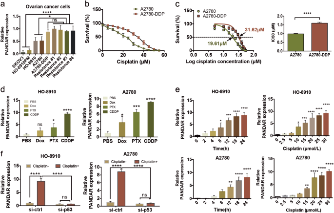 The Cisplatin Induced Lncrna Pandar Dictates The Chemoresistance Of Ovarian Cancer Via Regulating Sfrs2 Mediated P53 Phosphorylation Cell Death Disease