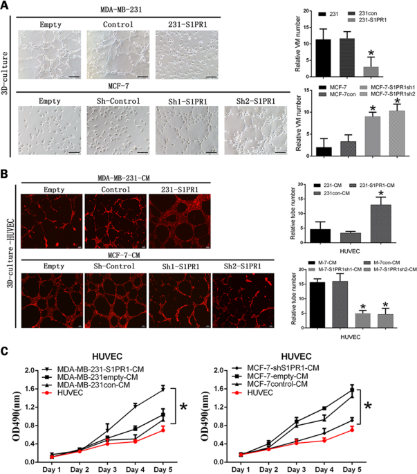 S1PR1 regulates the switch of two angiogenic modes by VE-cadherin phosphorylation in breast cancer