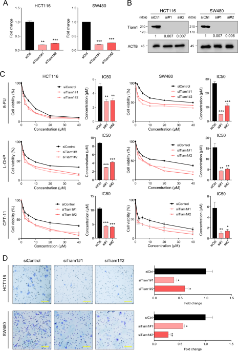 TIAM1 promotes chemoresistance and tumor invasiveness in colorectal cancer
