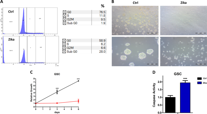 Zika virus infection induces MiR34c expression in glioblastoma stem cells: new perspectives for brain tumor treatments