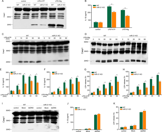 miR-21 promotes NLRP3 inflammasome activation to mediate pyroptosis and endotoxic shock