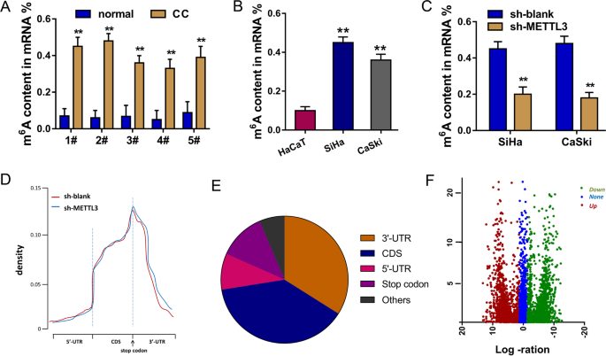 N6-methyladenosine METTL3 promotes cervical cancer tumorigenesis and Warburg effect through YTHDF1/HK2 modification