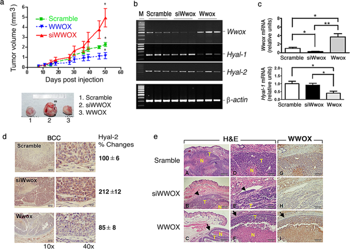 Strategies by which WWOX-deficient metastatic cancer cells