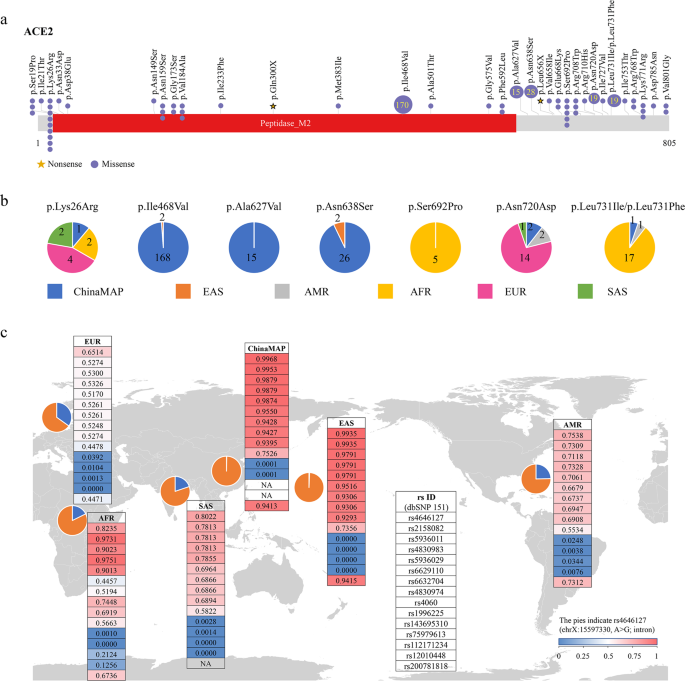 Comparative genetic analysis of the novel coronavirus (2019-nCoV/SARS-CoV-2) receptor ACE2 in different populations