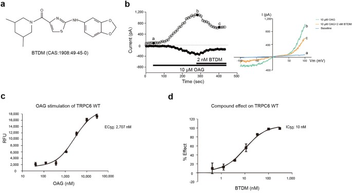 structure of the receptor activated human trpc6 and trpc3 ion