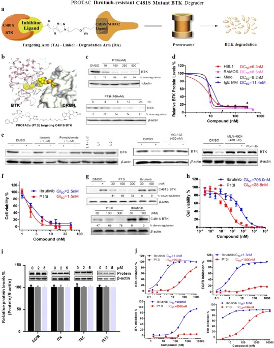 PROTAC-induced BTK degradation as a novel therapy for