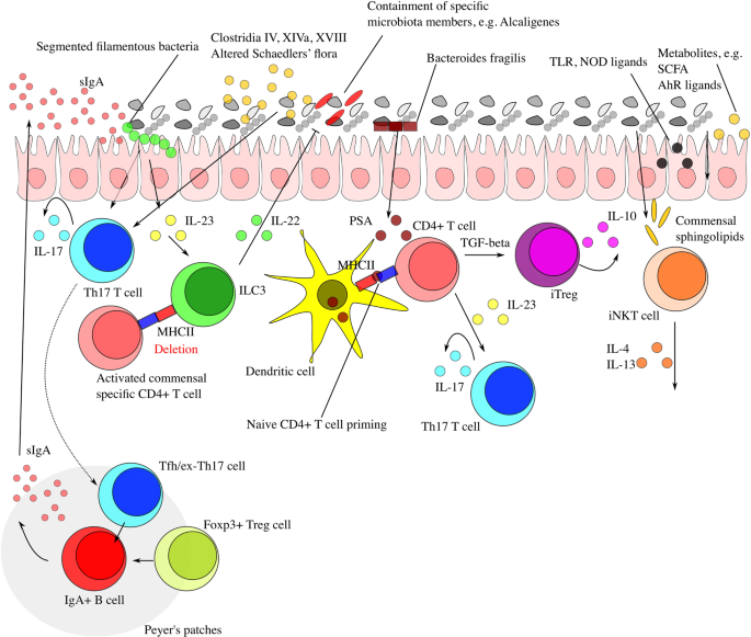 Interaction between microbiota and immunity in health and disease