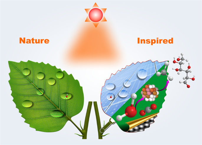 Nature-inspired materials: Emerging trends and prospects - NPG Asia Materials