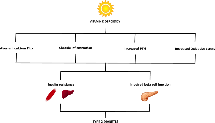 Vitamin D Past Present And Future Perspectives In The Prevention. Role Of Vitamin D Deficiency In The Pathogenesis Type 2 Diabetes Has An Important Preserving Homeostasis Insulin Sensitivity And. Wiring. Homeostasis Diagram Of Vit D At Scoala.co