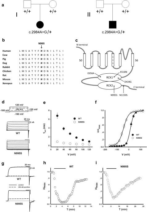 De Novo Bk Channel Variant Causes Epilepsy By Affecting Voltage