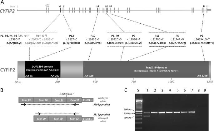 Spatially clustering de novo variants in CYFIP2 , encoding the