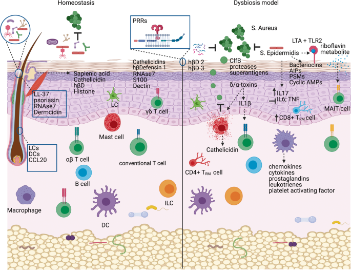 Mechanisms of microbe-immune system dialogue within the skin