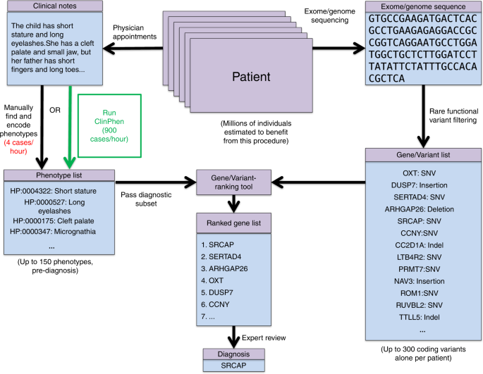ClinPhen extracts and prioritizes patient phenotypes
