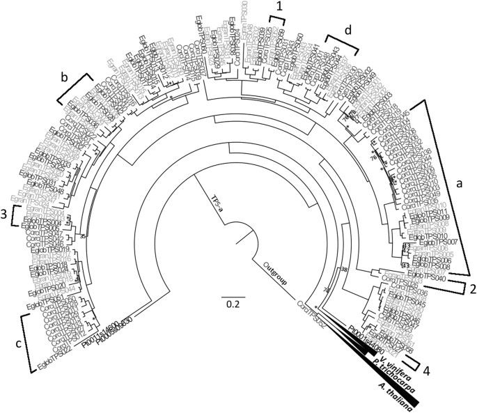 Annotation Of The Corymbia Terpene Synthase Gene Family Shows Broad