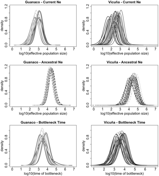 8f15ef9f48 Demographic analysis of vicuña and guanaco with MsVar. In each plot the  posterior distributions of the current effective population size (top row)