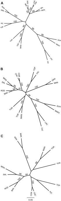 Genetic Patterns In Neotropical Magnolias Magnoliaceae Using De