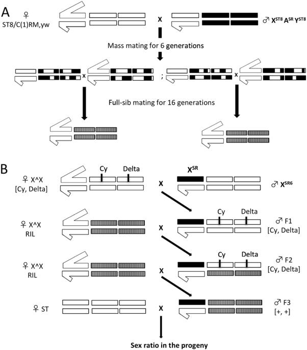 x-chromosome meiotic drive in drosophila simulans : a qtl approach reveals  the complex polygenic determinism of paris drive suppression | heredity