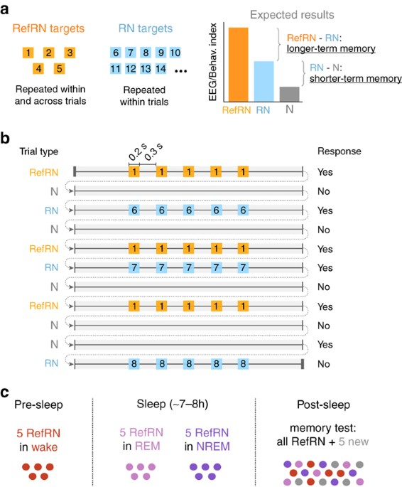 Formation and suppression of acoustic memories during human sleep