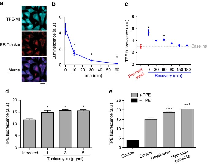 A Thiol Probe For Measuring Unfolded Protein Load And Proteostasis