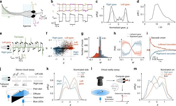 Sensorimotor Computation Underlying Phototaxis In Zebrafish