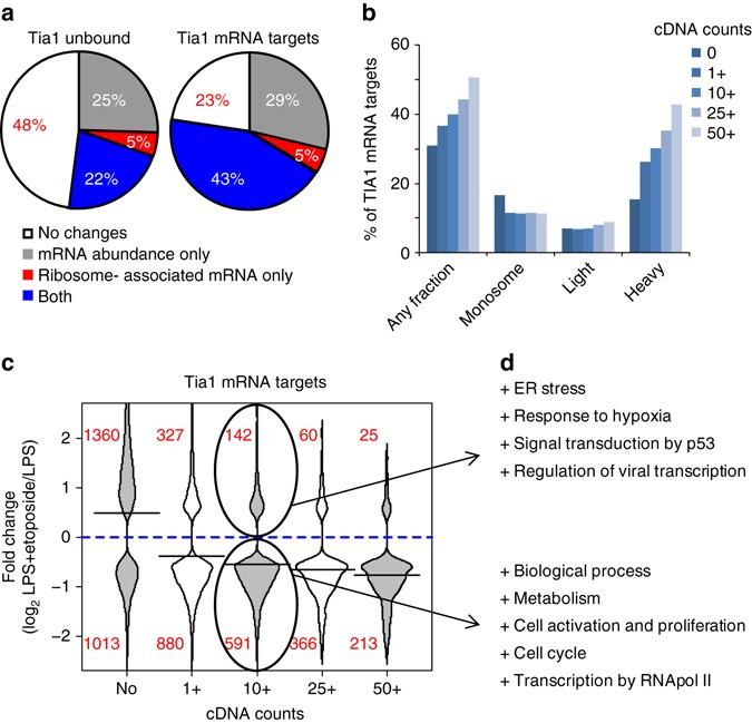 Tia1 dependent regulation of mRNA subcellular location and ...