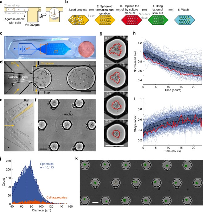 Multiscale cytometry and regulation of 3D cell cultures on a