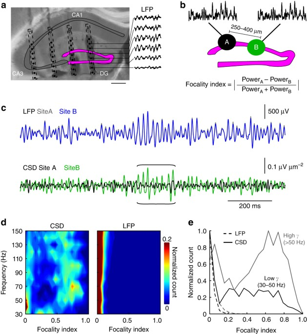 Distance Dependent Inhibition Facilitates Focality Of Gamma