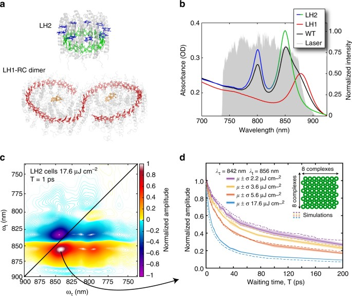 Mapping the ultrafast flow of harvested solar energy in