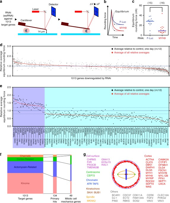 genome scale single cell mechanical phenotyping reveals disease