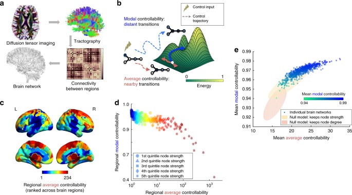 Cognition And Behavior White Matter >> Developmental Increases In White Matter Network Controllability