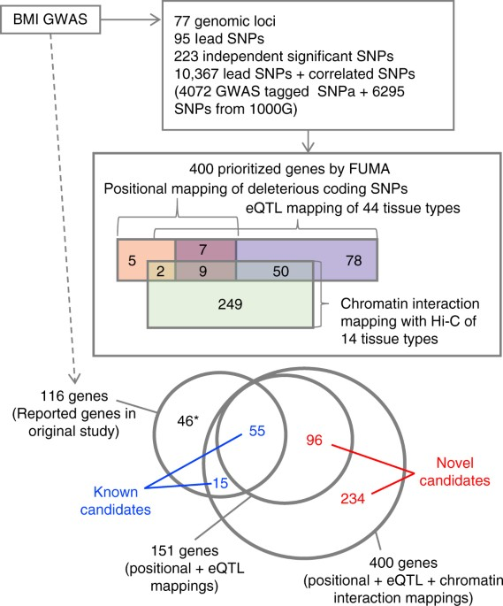 Functional Mapping And Annotation Of Genetic Associations With Fuma
