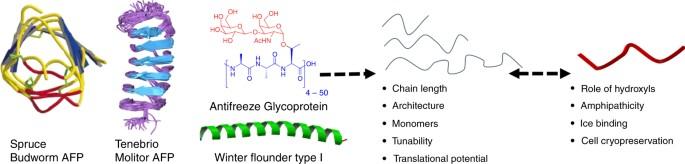 Polymer mimics of biomacromolecular antifreezes | Nature Communications