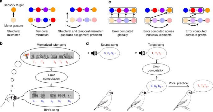 Songbirds work around computational complexity by learning