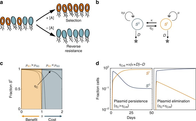 Persistence And Reversal Of Plasmid Mediated Antibiotic Resistance Nature Communications