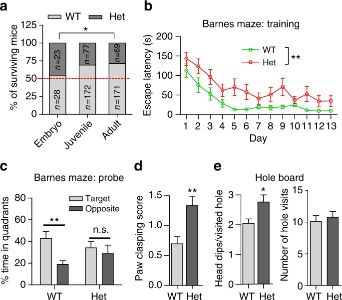 nitrosynapsin therapy for a mouse mef2c haploinsufficiency