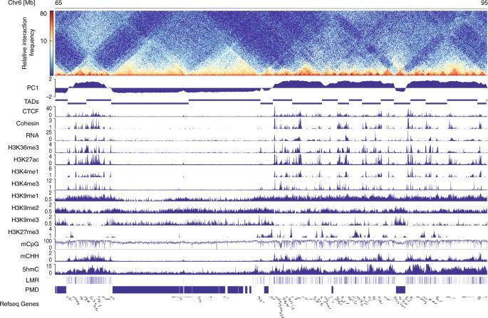 DNA methylation signatures follow preformed chromatin