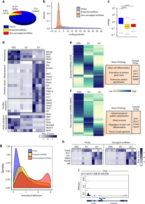a transcribed enhancer dictates mesendoderm specification in