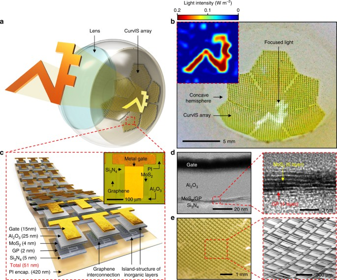 Human eye-inspired soft optoelectronic device using high-density MoS