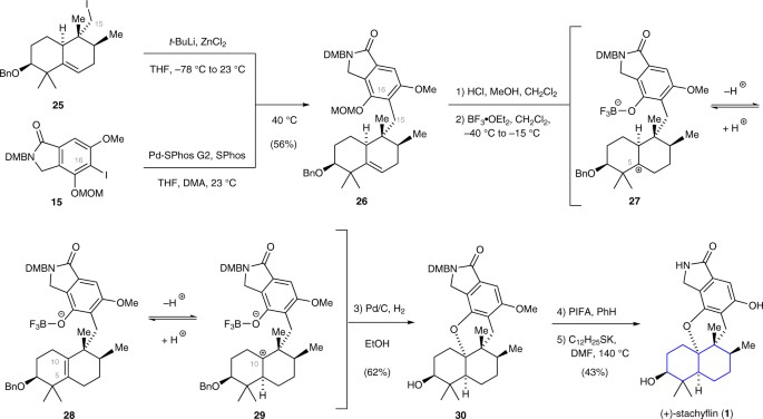 component coupling and total synthesis of stachyflin 1 the sp2sp3 negishi cross coupling reaction between arene 15 and iodide 25 provided the