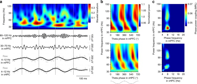 Hippocampal Prefrontal Theta Gamma Coupling During Performance Of A