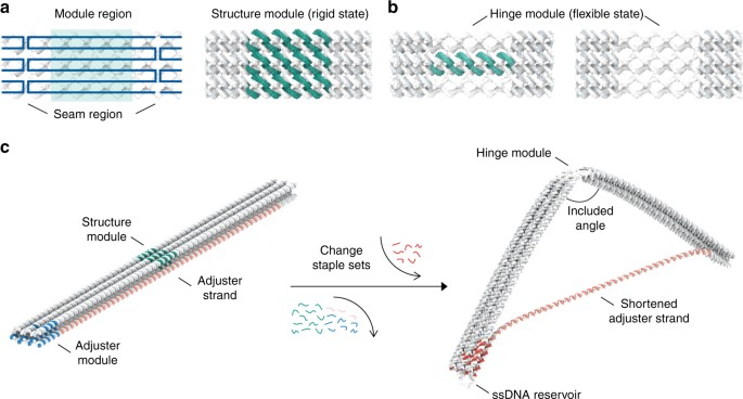 Polymorphic Design Of Dna Origami Structures Through Mechanical Control Of Modular Components Nature Communications