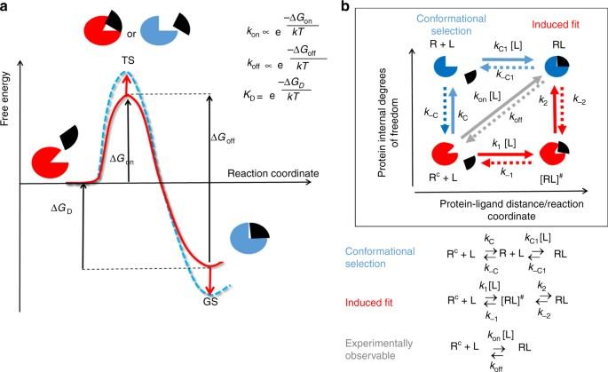 protein conformational flexibility modulates kinetics and rh nature com