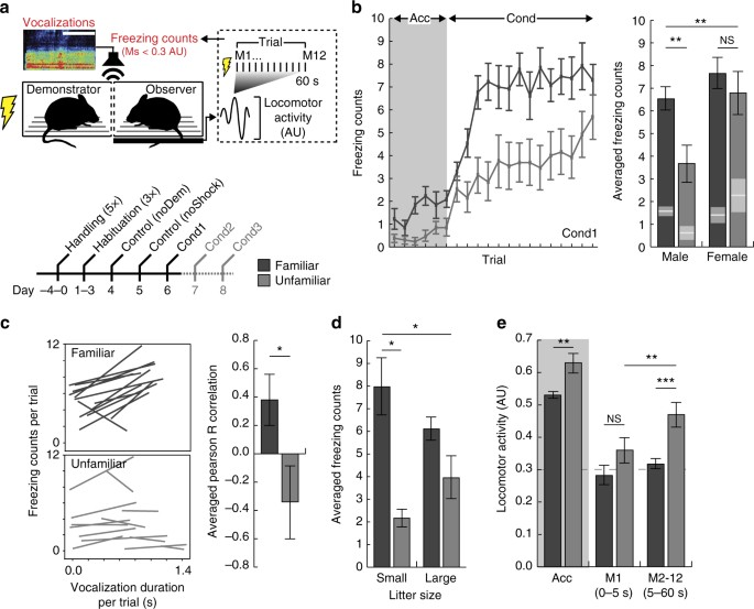 Oxytocin enhances observational fear in mice | Nature Communications