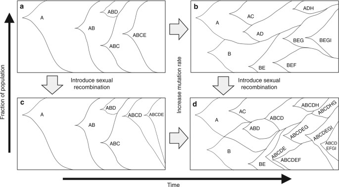 Sexual recombination and increased mutation rate expedite