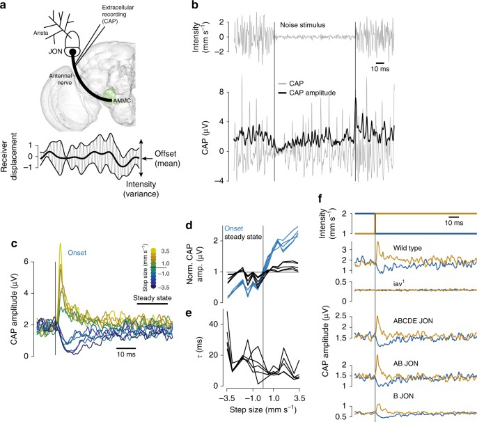 Fast intensity adaptation enhances the encoding of sound in