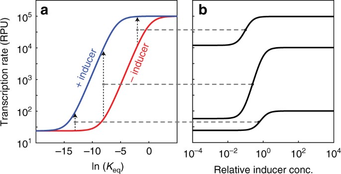 Tuning the dynamic range of bacterial promoters regulated by