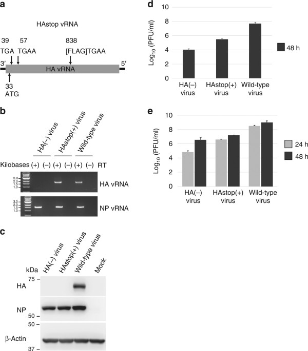 Importance Of The 17 Configuration Of Ribonucleoprotein Complexes
