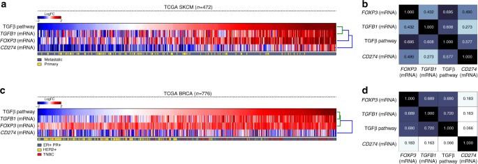 Bifunctional immune checkpoint-targeted antibody-ligand