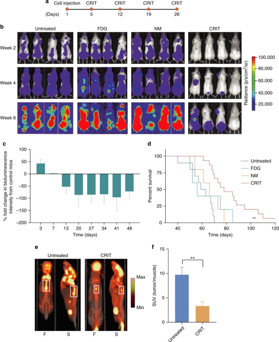Radionuclides transform chemotherapeutics into phototherapeutics for response of multiple myeloma to crit a timeline of treatment b bioluminescence imaging of representative multiple myeloma bearing mice in different fandeluxe Gallery